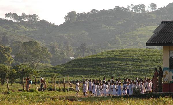 Schulkinder auf einer Teeplantage