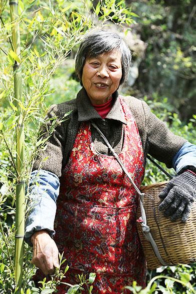 Teemeisterin von Purple Bamboo Shoot