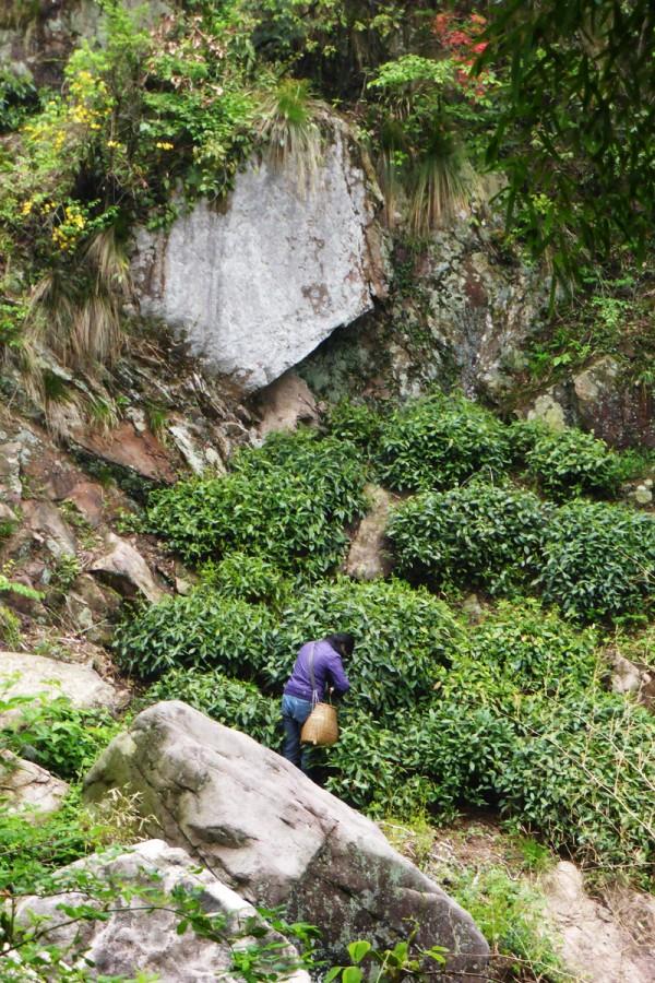 An Ji Bai Cha Gebiet