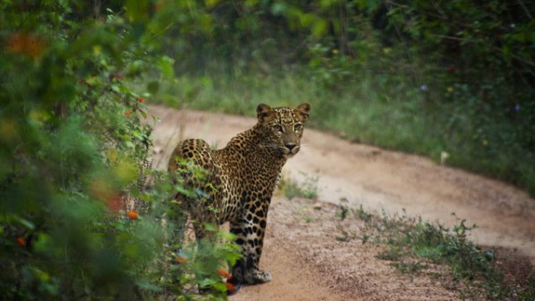 Yala-National-Park-640x360