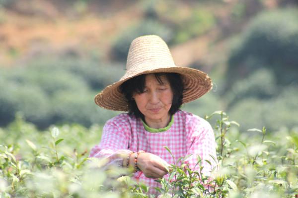 Long Jing Tee