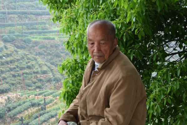 Teemeister Long Jing